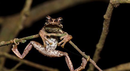 MAPPING THE MALABAR TREE TOAD